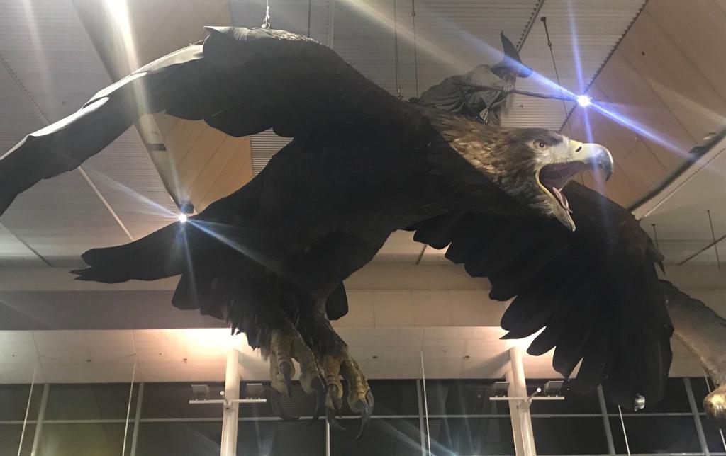 Aeropuerto de Wellington con el águila y Gandalf, el personaje de El Señor de los Anillos